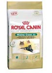 Royal Canin Mainecoon 10 kg.